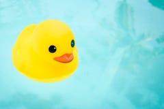 Gummi Ducky Stockbild
