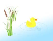 Gummi Ducky Lizenzfreies Stockbild