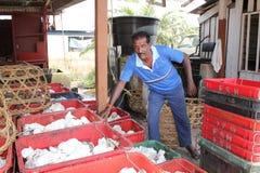 Gummiarbeitskräfte und Gummis lizenzfreies stockfoto