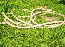 Gummiband på gräs Arkivbild