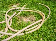Gummiband på gräs Royaltyfri Foto