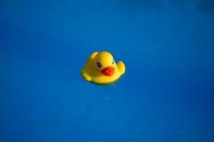 Gummiente im Swimmingpool lizenzfreies stockbild