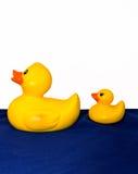Gummiente und Ducken Stockbilder