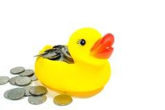 Gummiente und Münze Stockbild