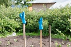 Gummihandschuhe trocknen auf einem Stock Ländliche Gebiete Lizenzfreies Stockbild