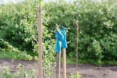 Gummihandschuhe trocknen auf einem Stock Ländliche Gebiete Lizenzfreie Stockfotografie