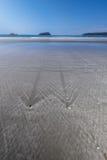 Gummihjul som att dra sig tillbaka ner stranden Royaltyfri Foto
