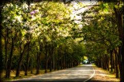 Gummiplantage im südlichen, Thailand Stockbild