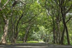 Gummiplantage im südlichen, Thailand Lizenzfreie Stockfotos