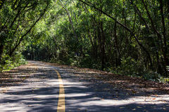Gummiplantage im südlichen, Thailand Lizenzfreies Stockbild