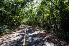 Gummiplantage im südlichen, Thailand Lizenzfreies Stockfoto