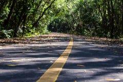 Gummiplantage im südlichen, Thailand Lizenzfreie Stockfotografie