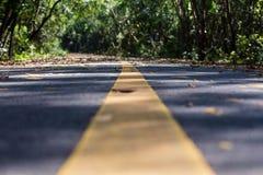 Gummiplantage im südlichen, Thailand Stockfoto