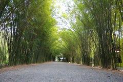Gummiplantage im südlichen, Thailand Lizenzfreie Stockbilder