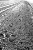 Gummireifen Spuren und Footpirnts im Sand Lizenzfreie Stockbilder