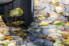 Gummireifen und Blätter Stockbild