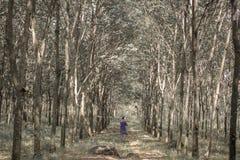 Gummiträdgård Indonesien arkivbilder