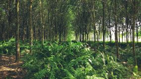 Gummiträdgods royaltyfria bilder