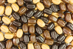 Gummy candy coffee beans Royalty Free Stock Image