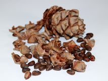 Gummy resinous husked cedar cone with cedar nuts on light background closeup royalty free stock photo