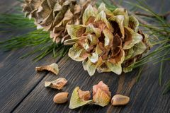 Gummy resinous husked fir-cones with conifer needle branch and c. Edar nuts on dark wooden background closeup stock photos