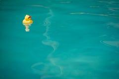 Gumowa kaczka Fotografia Stock