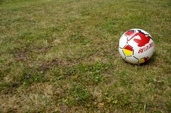 Gumowa piłka na łące Obraz Stock