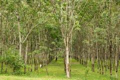 Gumowa plantacja w Langkawi, Malezja fotografia royalty free