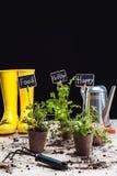 Gumowi buty i ogrodowi narzędzia Obrazy Stock
