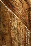gumowi drzewa Obrazy Royalty Free