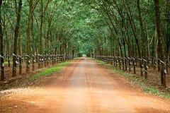 Gumowi drzewa przy Wietnam Fotografia Royalty Free