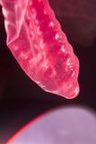 Gumowy kondoma antykoncepcyjny Fotografia Stock