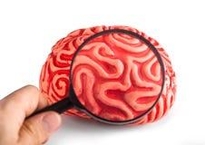 Gumowy mózg widzieć z powiększać - szkło Obraz Royalty Free