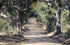 Gumtree alinhou a estrada de terra Fotografia de Stock