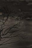Gumtree et le ciel d'automne Photos stock