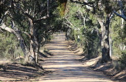 Gumtree lined dirt road Stock Photography
