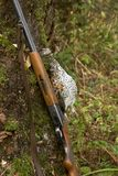 Gun and a bird. Old gun and the hazel grouse Royalty Free Stock Photo
