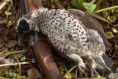 Gun and a bird. Old gun and the hazel grouse Royalty Free Stock Photos