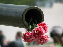 Gun with a carnations. Trunk of a gun with a bouquet of red carnations Royalty Free Stock Photos