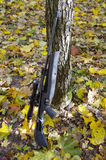 Gun pneumatic. In autumn wood royalty free stock photography