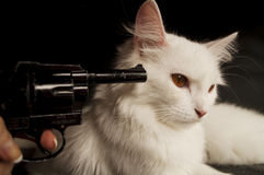 Gun pointed to cat's head. Girl holding gun pointed at white Persian cat stock images