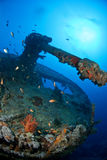 Gun of a ship wreck. With coral and school of fish Royalty Free Stock Image