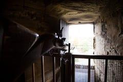 Gun. In Warwick Castle,  United Kingdom Stock Photo