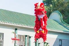 GUNAGDONG,中国- 2015年11月27日:在黄飞鸿狮子的舞狮 图库摄影
