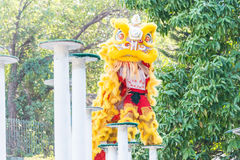 GUNAGDONG, CHINA - 27 Nov. 2015: Lion Dance in Wong Fei Hung Lion Royalty-vrije Stock Afbeelding