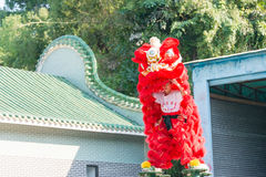 GUNAGDONG, CHINA - 27 Nov. 2015: Lion Dance in Wong Fei Hung Lion Stock Afbeelding