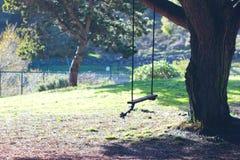 Gunga på ett träd Arkivfoton