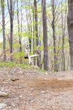 Gunga till och med träden Arkivfoto