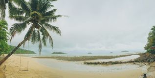Gungan på kokospalmen Royaltyfria Foton