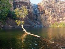 Gunlom (vattenfallliten vik) pöl, Kakadu nationalpark, Australien Arkivfoto